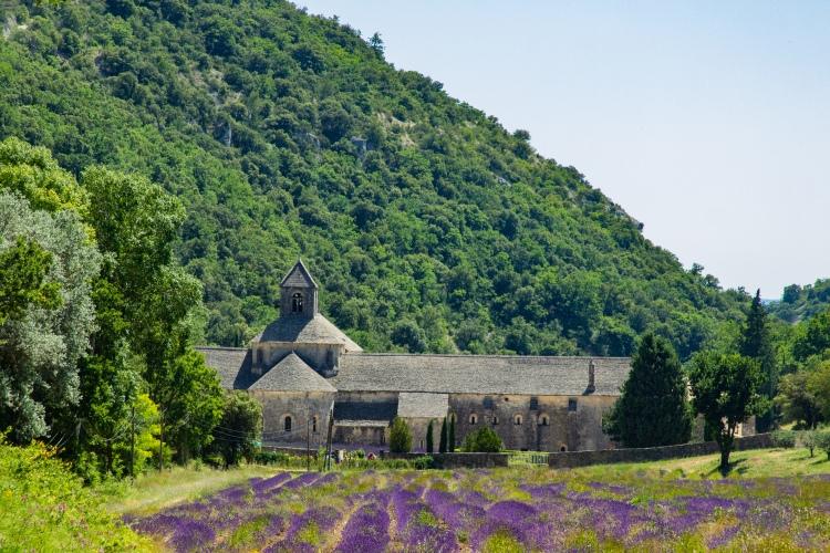 Sénanque Abbey lavender fields